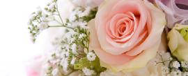 北海道札幌市の結婚調査